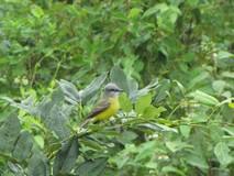 Y1304_Uxmal_Birds