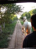 Y1925_Cuzama_HorseyRide