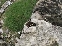 Y3367_Palenque_JungleScenes