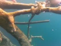 Y5219_RioBec_CenoteAzul