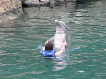 Y7112_Xcaret_SwimDolphins