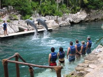 Y7118_Xcaret_SwimDolphins