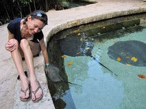 Y7126_Xcaret_CrocsTurtlesRays