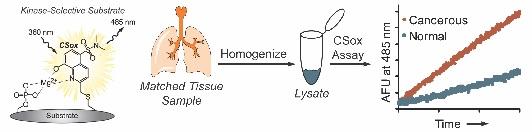 Amino Acid Analysis : Methods and Protocols