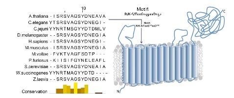 Molecular sensor