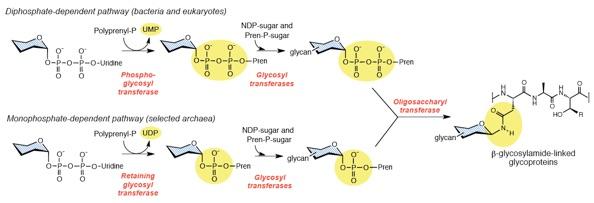 1C: Types of Receptors